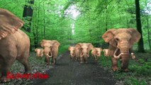 Elephant sounds / Elephants Walking in A Forest - Beautiful Animated Videos / Animal Sounds