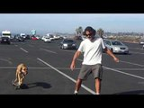 Guy and Dog Skateboard in Parking Lot