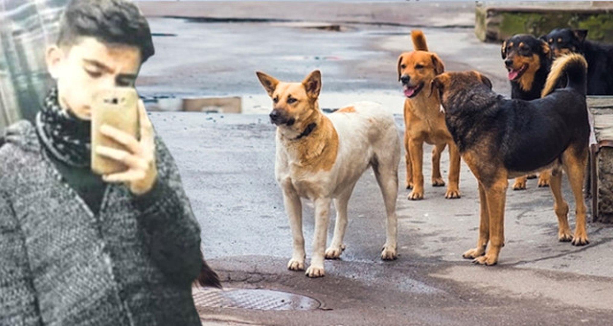 Kayseri'de Liseli Genci Parçalayarak Öldüren Sokak Köpekleri, Dehşet Saçmaya Devam Ediyor