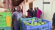 Mali - le plus gros producteur de mangues en Afrique de l'Ouest