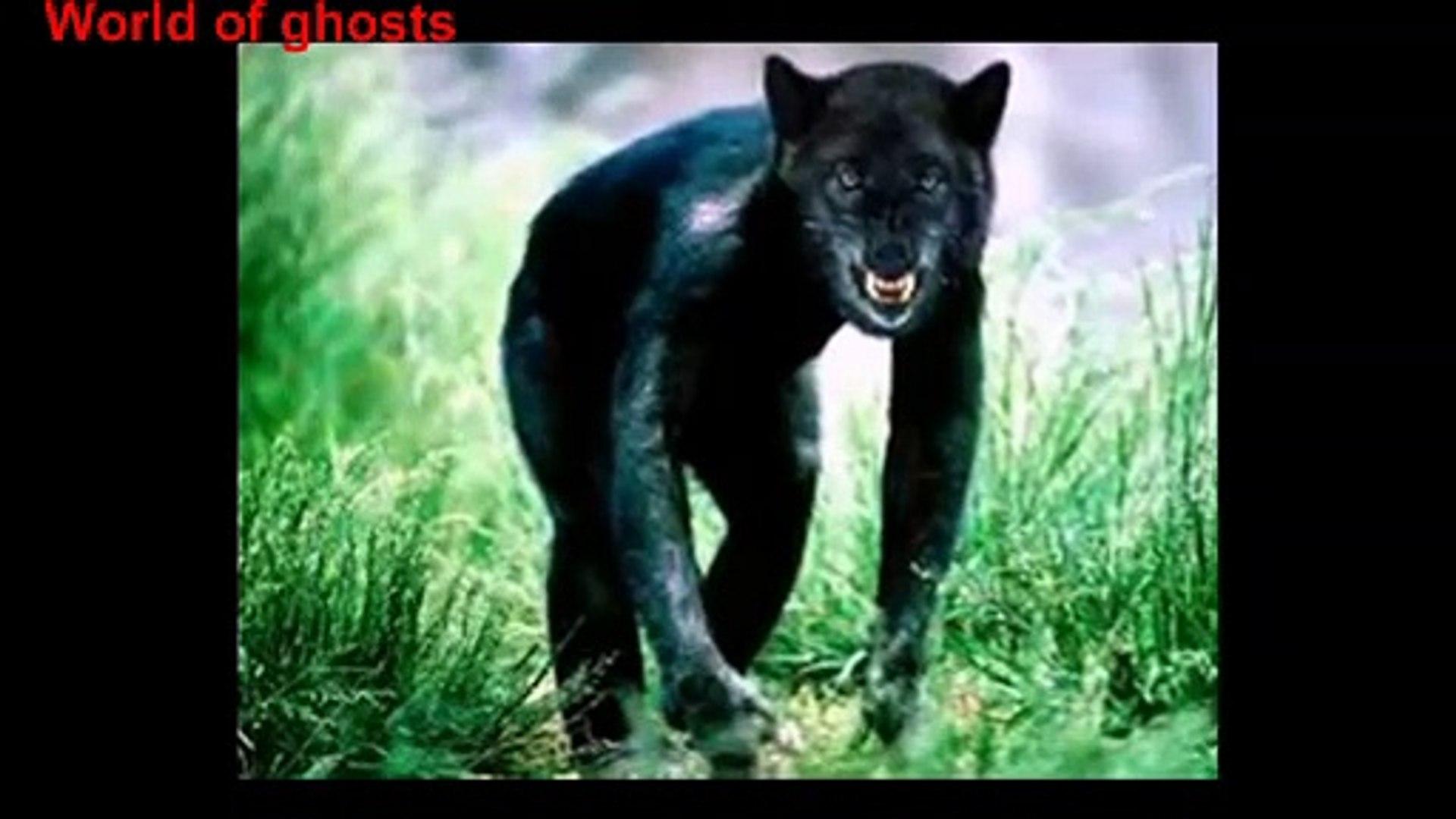 Реальные оборотни мистика или факт ЖУТЬ . Real werewolves mysticism or fact