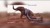Wild Animal Attacks ! Amazing Wild Animals Attacks ! Craziest Animal Fights Caught On Camera !