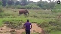 فيديو: حاول أن يمرح مع فيل ضخم وينومه مغناطي�