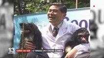 Corée du Sud : le succès des chiens clonés