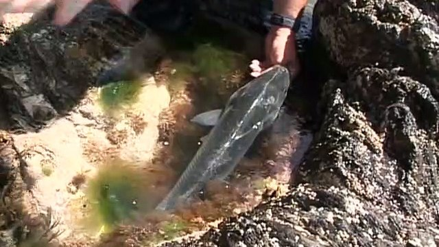 Wild Fishing With Henry Gilbey E02 South East Ireland