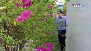Ngam Ngui Tap 43 Ban Chuan Phim Viet Nam THVL1 Phim Ngam Ngu
