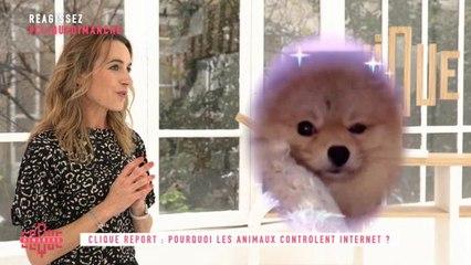Clique Report : Pourquoi les animaux controlent Internet ? - Clique Dimanche - CANAL+