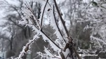 Impressive rime ice forms during winter storm