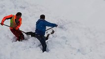 Autriche : un chamois enseveli sous près d'un mètre de neige sauvé de justesse par des cheminots