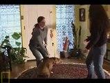 Dog Whisperer Season 4 Episode 19 Rufus and Buddy