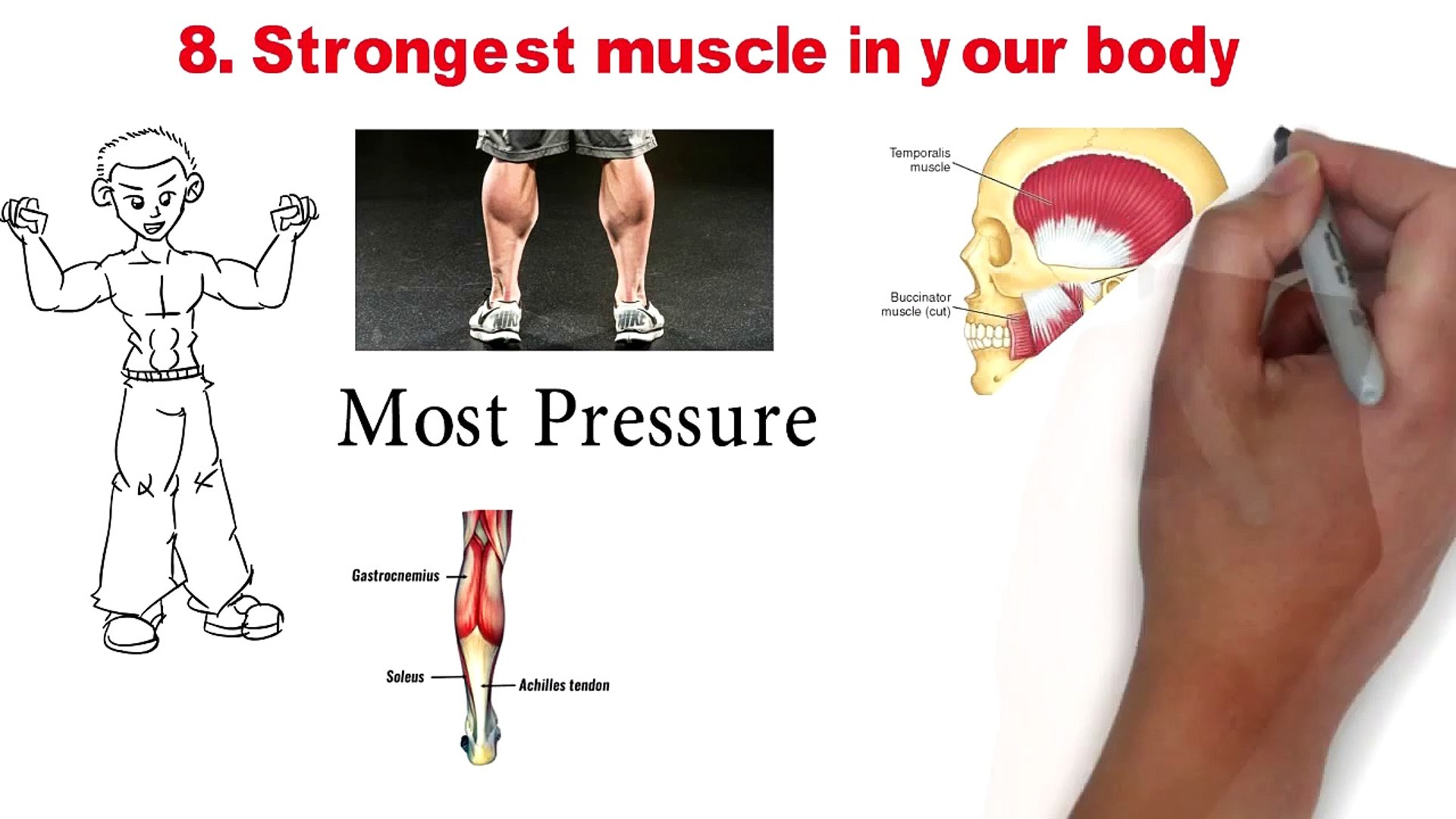 Your whats the body strongest muscle in Strongest Muscle: