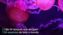 O charme das águas-vivas