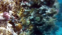 Diving on a coral reef in Egypt, Sharm el-Sheikh