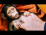 """""""Human Get Sick, Ape Get Smart"""" Trailer - The Planet Of The Apes 3 (2017)"""