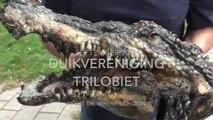 En zo werd de gedumpte krokodillenkop een symbool tegen zwerfaval in Purmerend