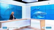 Hawaï : face à un requin blanc