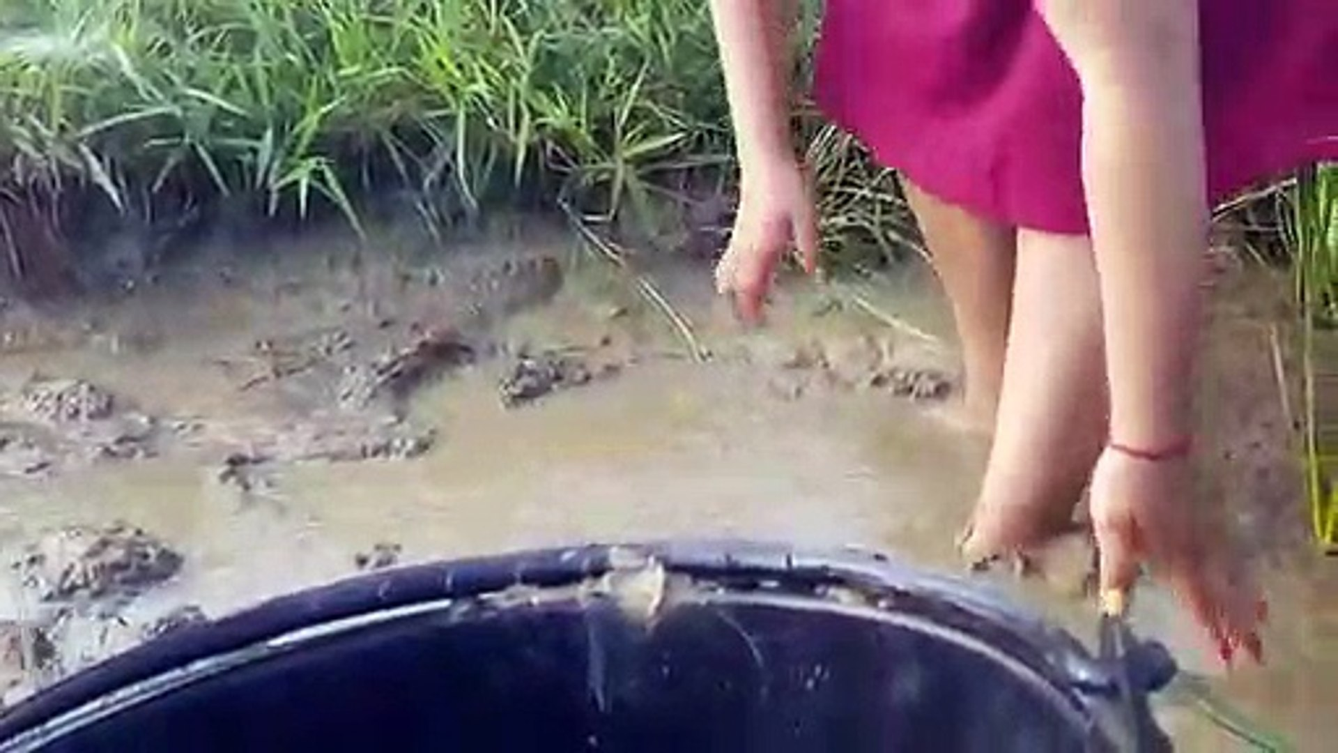 Girl catch Fishing and find Crab by hand Very Happy _ catch Fish at rice Field