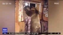 [투데이 영상] 갈색 곰의 백허그…세상 다정하네!