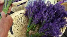 Travel Track On Sirk TV: PURPLE MOUNTAIN LAVENDER FARM [Lakeside, Montana] - Part II