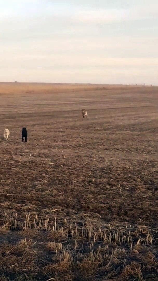 Chú chó bỏ nhà đi bụi và dẫn cả băng đảng giang hồ về nhà
