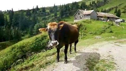 Wanderung im Allgäu: Über den Hochgrat