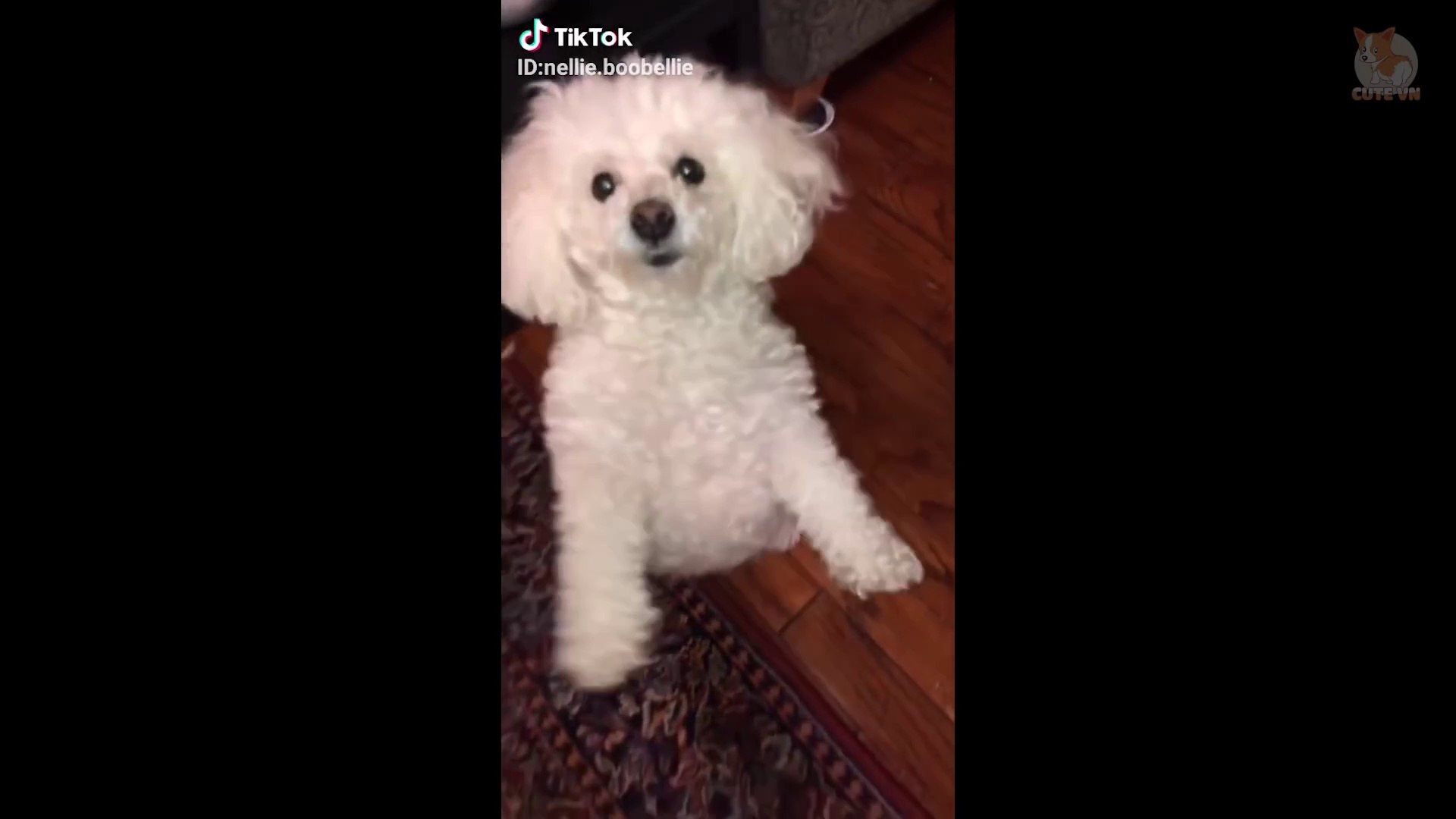 TikTok Pets- Funny and Cute Pets Compilation  #1