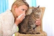 Quel chat choisir si vous êtes allergiques ?