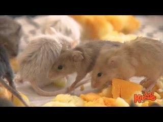 Mice INVASION Prank!