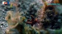 Criaturas Surpreendentes do Mar Batangas, Strange Creatures of the Batangas Sea, Odisseia