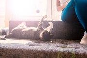 Comment stimuler son chat lorsque l'on est en appartement ?