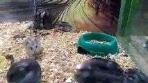 Quand ton hamster devient complètement fou... Backflips ratés