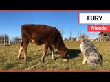 Adorable calf becomes best friends with dog | SWNS TV | SWNS TV