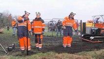 La peste porcine africaine inquiète les Européens, les Danois érigent une barrière