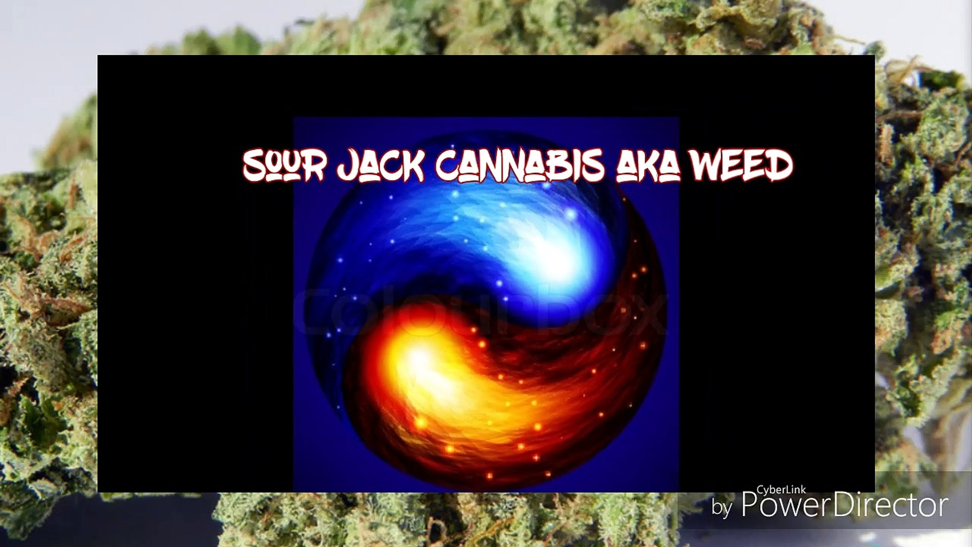 Sour Jack Cannabis Weed Review by Herb  and song intro by d-train