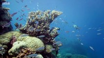 BBC Great Barrier Reef 1of3 Natures Miracle