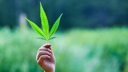 CBS Refuses to Air Cannabis Company's Super Bowl Ad