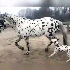 Ce chien croit avoir retrouvé sa mère !