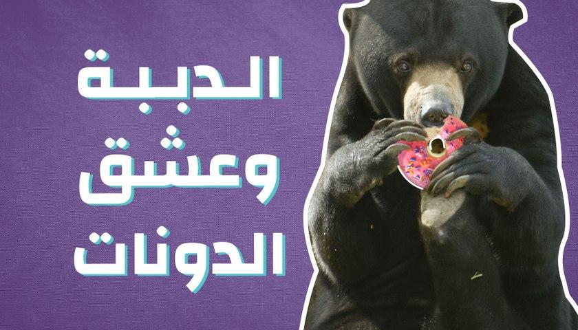الدببة وعشق الدونات