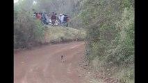 Saut d'une voiture de rallye au-dessus d'un chien au milieu de la route !