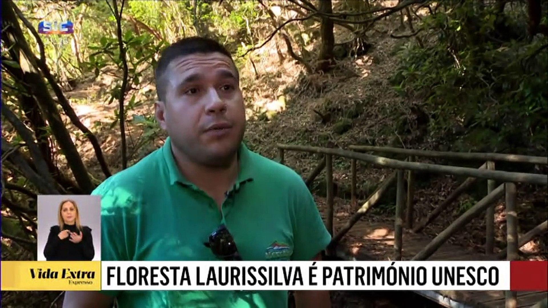 Conheça a floresta Laurissilva é um dos maiores atrativos turísticos da ilha da Madeira.