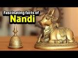 Fascinating facts of Nandi  |  Shiva's Nandi Bail | Artha | AMAZING FACTS