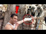 Salman Khan FEEDING MONKEYS & WISHING Eid- Mubarak To His Fans