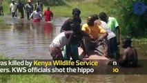 Kisumu residents feast on hippo killed by KWS officers