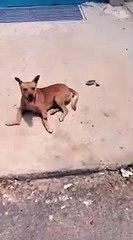 Morador arremessa cão de janela de prédio no DF e causa revolta