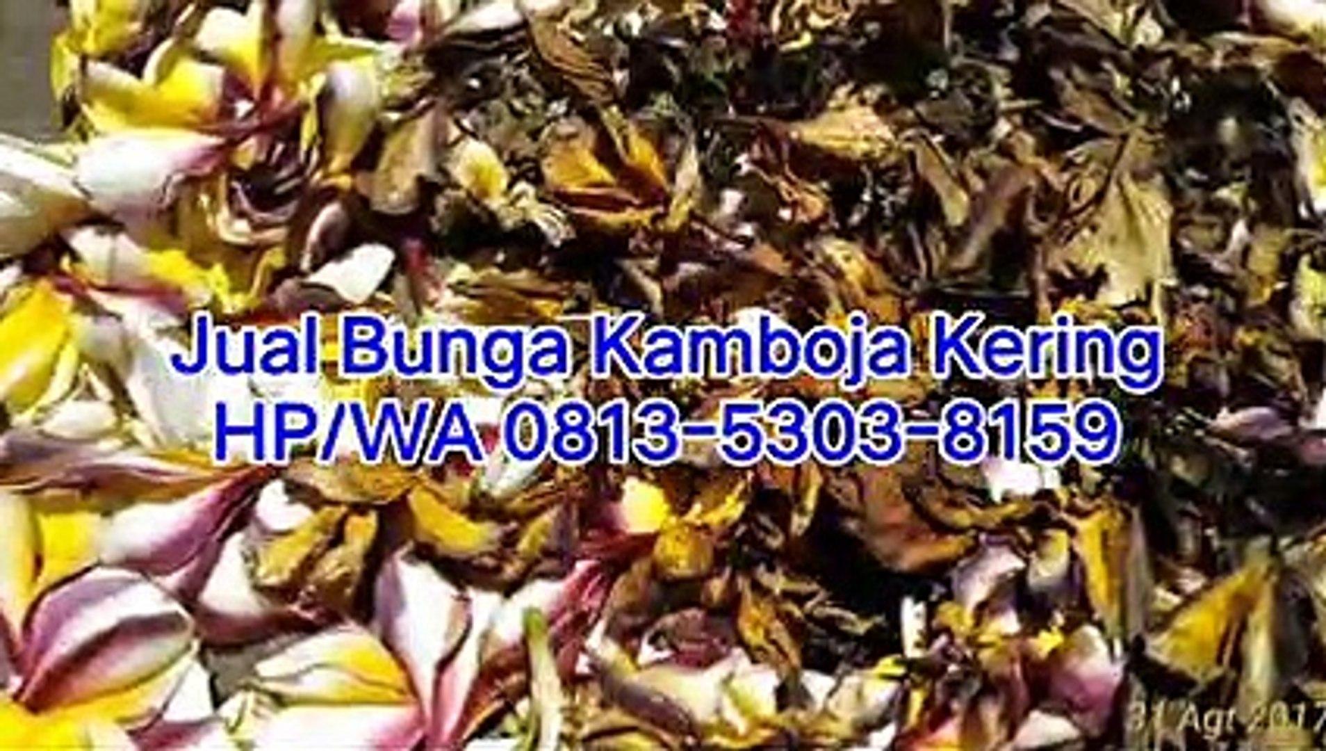 TERMURAH!!! HP/WA 0813-5303-8159, Jual Kamboja Kering di Surabaya