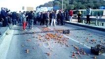 Ora News - Fermerët e Urës Vajgujore hedhin manderinat në rrugë: Ja ku shkon prodhimi shqiptar
