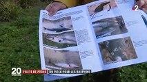 Filets de pêche : un piège mortel pour les dauphins