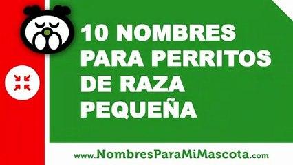 10 nombres para perritos de raza pequeña - nombres de mascotas - www.nombresparamimascota.com