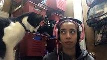 Ce chat adorable demande des calins sur la tête en grattant avec sa patte! Trop mignon