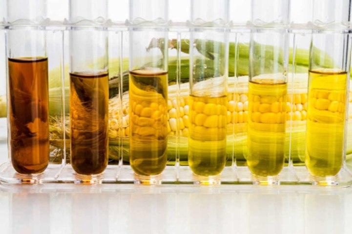 A brief look into bioenergy